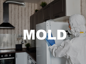 mold remediation west columbia